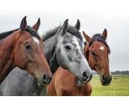 Utstyr for hest