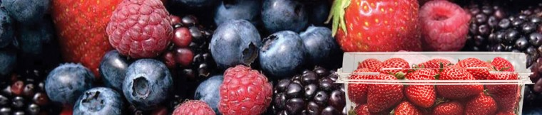 banner-berries[1]