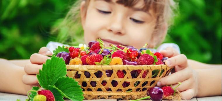 child-is-picking-cherries-garden-selective-focus_7