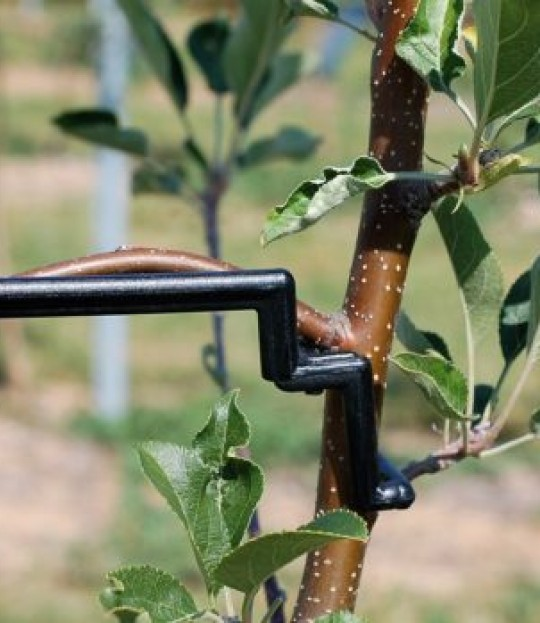 Frukttreklips, nedbøying av greiner, 250 stk