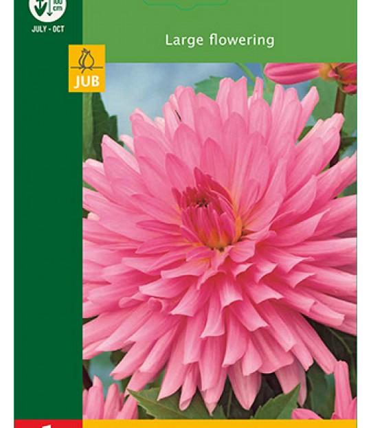 Blomsterknoll Georgine Cactus Rosa 1 stk