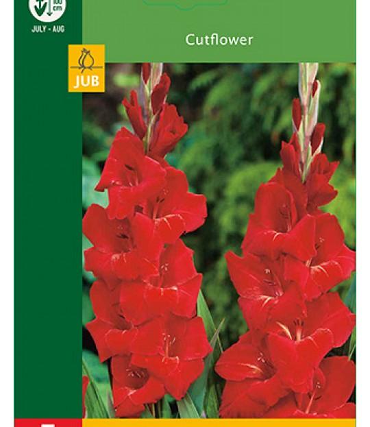 Blomsterknoll Gladioler Rød 5 stk