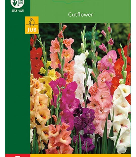 Blomsterknoll Gladioler Fargemix 5 stk