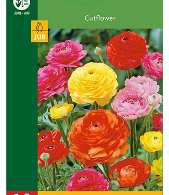 Blomsterløk Soleie Ranunculus Mix 10 stk
