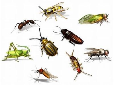 Innsektsmiddel